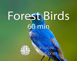 Forest-Birds-60min-Featured