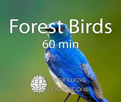 Forest-Birds-60min-Featured