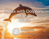 Relax-with-Dolphins-and-Whales-60min-Featured